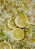 Sambuchi e fette del limone Fotografie Stock Libere da Diritti