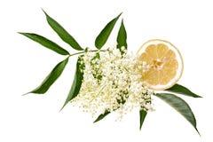 Sambuco con il limone e le foglie isolati fotografie stock