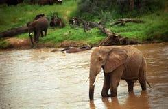 samburu de réserve du Kenya de jeu d'éléphants africains Image stock