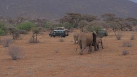 Samburu, Kenia 22 Juli, 2017: Safari Jeeps With Tourists Photo-Olifanten 4k stock video