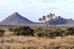 Samburu lato w Afryka Obraz Stock
