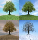 Tree changing over the duration of four seasons. The same tree changing over the duration of four seasons, 3d render illustration stock image