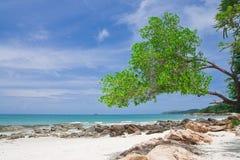 samed strandö Arkivbild