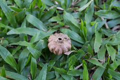 Samen auf dem Gras Stockbild