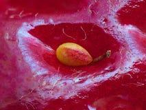 Samen auf Oberfläche der Erdbeere Stockfotografie
