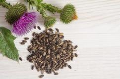 Samen einer Mariendistel mit Blumen Stockfotos