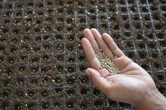 Samen im Kindertagesstättenbehälter Stockfotografie