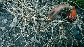 Samen und das trockene Gras lizenzfreie stockfotos