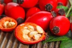 Samen und Hagebuttenfrucht Stockfotografie