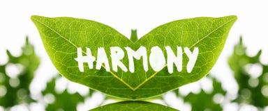 Samengebrachte groene bladeren met het woord - Harmonie Stock Afbeelding