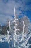 Samenstelling 2 van de winter Stock Afbeelding