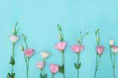 Samenstelling met bloemen op kleurenachtergrond Stock Foto's