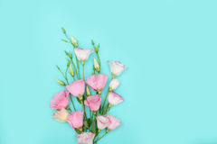 Samenstelling met bloemen op kleurenachtergrond Stock Fotografie