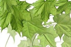 Samenstelling met de lentebladeren royalty-vrije stock afbeeldingen