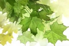 Samenstelling met de lentebladeren Stock Fotografie