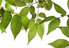 Samenstelling met de lentebladeren stock afbeelding