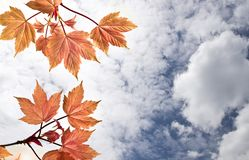 Samenstelling met de lentebladeren Stock Foto