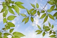 Samenstelling met de lentegras op blauwe hemelachtergrond royalty-vrije stock afbeelding