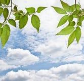 Samenstelling met de lentegras op blauwe hemelachtergrond stock afbeeldingen