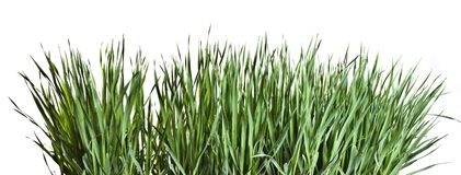 Samenstelling met gras Royalty-vrije Stock Foto