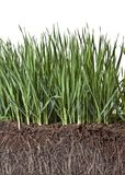 Samenstelling met gras en compost Stock Foto's