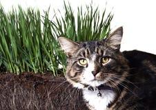 Samenstelling met gras en kat Stock Fotografie