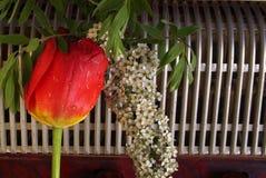 Samenstelling met harmonika en tulpenbloemen royalty-vrije stock fotografie