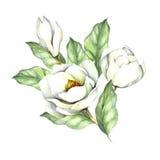 Samenstelling met magnolia De hand trekt waterverfillustratie Royalty-vrije Stock Afbeeldingen
