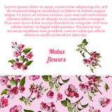 Samenstelling met naadloze patroon en stickers van tot bloei komende roze tak van appelboom en bloemen Hand getrokken gekleurde s vector illustratie