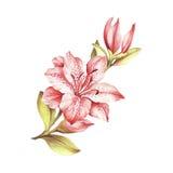 Samenstelling met tot bloei komende lelies De hand trekt waterverfillustratie Stock Afbeelding