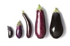 Samenstelling van aubergines Royalty-vrije Stock Afbeeldingen