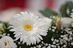 Samenstelling van bloemen met margriet stock afbeelding