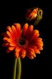 Samenstelling van de bloemen Stock Foto