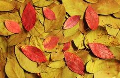 Samenstelling van de herfst droge bladeren Stock Afbeeldingen
