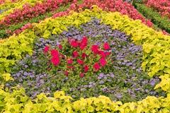 Samenstelling van diverse bloemen in het stadspark stock afbeelding