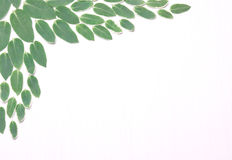 Samenstelling van groene bladeren Stock Foto's
