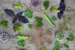 Samenstelling van groenten en kruiden stock foto