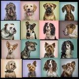 Samenstelling van honden tegen gekleurde achtergronden royalty-vrije stock foto's