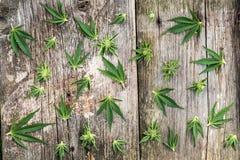 Samenstelling van marihuana Stock Afbeelding