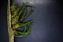 Samenstelling van Moss Growing van Oude Boomtak en Geplaatst op Zwarte Oppervlakte Als achtergrond met Vrije Ruimte royalty-vrije stock foto's
