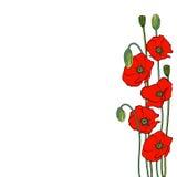 Samenstelling van rode papaverbloemen op a stock illustratie