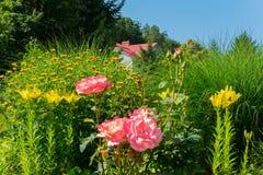 Samenstelling van roze rozen en gele lelies tegen een achtergrond van hoog groen gras Stock Fotografie