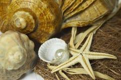 Samenstelling van shells en peer Stock Foto's