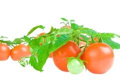 Samenstelling van tomaat en bladeren van tomaat stock afbeelding