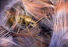 Samenstelling van zachte zachte veren en ruwe harde kever-snor stock afbeeldingen