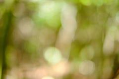 Samenvatting Achtergrondonduidelijk beeld in groene tonen Royalty-vrije Stock Afbeelding
