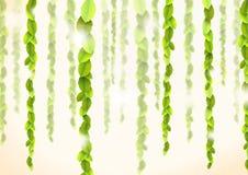 Samenvatting backround met lianas Stock Afbeelding