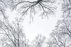 Samenvatting bevroren boomtakken De achtergrond van de winter Royalty-vrije Stock Foto's