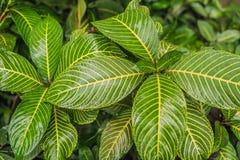 Samenvatting donkergroen van tropische installatie en groen blad na regendalingen in moessonseizoen stock afbeeldingen