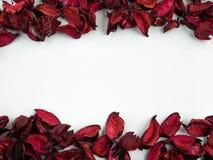 Samenvatting met droge rode bloemblaadjes op witte achtergrond Stock Afbeeldingen